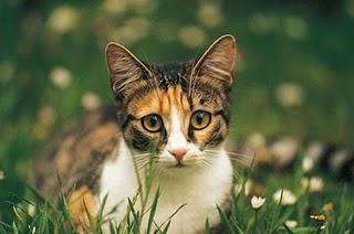 Savannah Cat Rescue Washington State